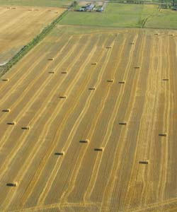 Field of hay bales seen from a plane