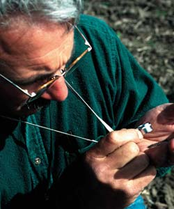 Man examines insects